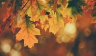 "<span>Photo by <a href=""https://unsplash.com/@timothyeberly?utm_source=unsplash&amp;utm_medium=referral&amp;utm_content=creditCopyText"">Timothy Eberly</a> on <a href=""https://unsplash.com/s/photos/autumn?utm_source=unsplash&amp;utm_medium=referral&amp;utm_content=creditCopyText"">Unsplash</a></span>"