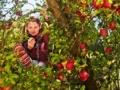Fruitbomen voor groene schoolpleinen