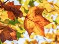 Gedicht: Een eeuw leven in vier jaargetijden